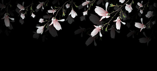 Panel Szklany Kwiaty realistic Magnolia flower isolated on black background. symbol of summer, femininity in the style of realism. 3d, three-dimensional seamless rose flower background for invitation. Widescreen. vector g