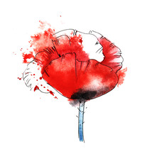 Red Poppy On A White Background In A Spray Of Scarlet Paint. Hand Drawn Watercolor Illustration.