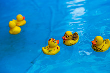 Ducks In Swimming Pool
