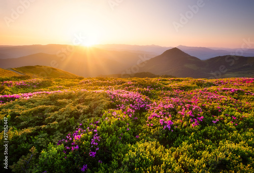 Foto auf Leinwand Schwarz Mountains during flowers blossom and sunrise. Flowers on mountain hills. Natural landscape at the summer time. Mountains range. Mountain - image