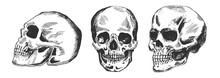 Human Skull In Different Posit...