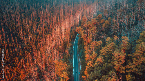 Ingelijste posters Bomen Aerial View of Road in Mountains, Australia
