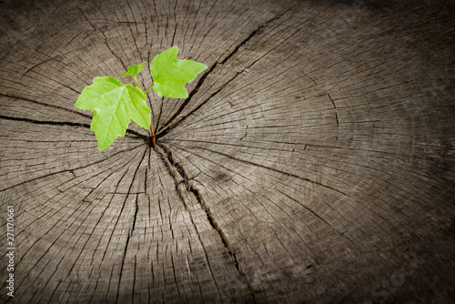 New recycled growth from old concept. Recycled tree stump with rings and cracks growing a new sprout or seedling.  - 271170661