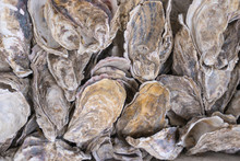 Shell Oyster In The Market At ...
