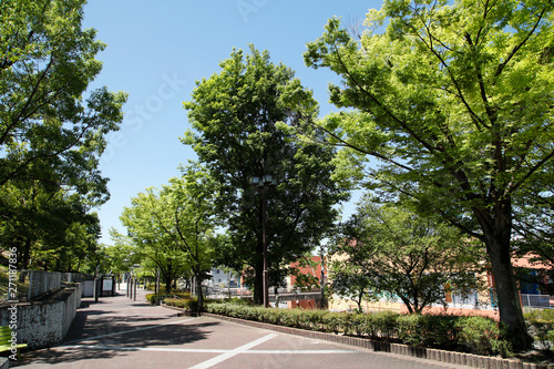 新緑と散策路 新緑の並木道 新緑 散策路 並木道 道路