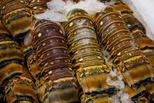 Several Units Of Maine Lobster Tails On Ice