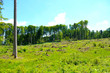 canvas print picture - Waldlandschaft mit abgeholzten Bäumen