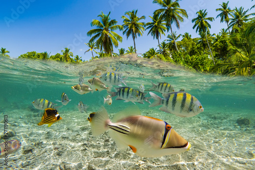 Leinwand Poster Underwater Scene With Reef And Tropical Fish