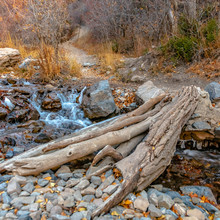 Square Bridge Made Of Tree Trunk Over A Rocky Creek With Shallow Flowing Water