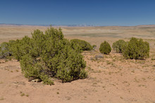 Desert Plains Between Book Cliffs And Colorado River On The Border Of Utah And Colorado