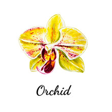 Beautiful Single Yellow Orchid Flower. Watercolor Painting. Exotic Plant. Floral Print. Botanical Composition. Wedding And Birthday. Greeting Card. Flower Painted Background. Hand Drawn Illustration.