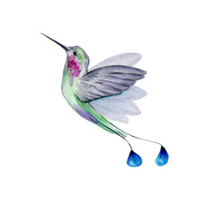 Watercolor Hummingbird Flying ...