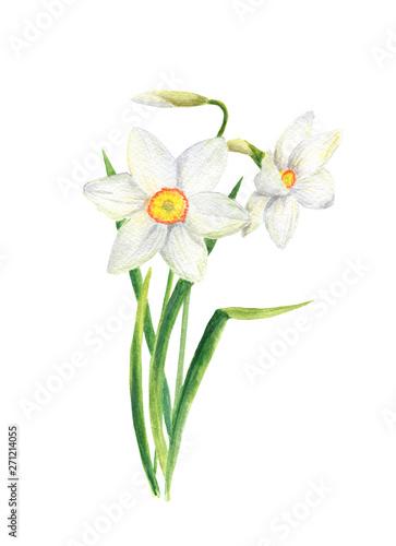 Watercolor narcissus flower Wallpaper Mural