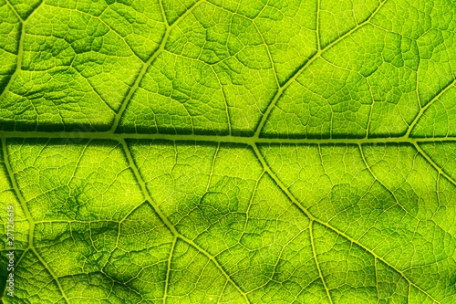 Recess Fitting Macro photography Abstract background green leaf closeup. Image for project and design. Green Texture Leaf. Nature Background.