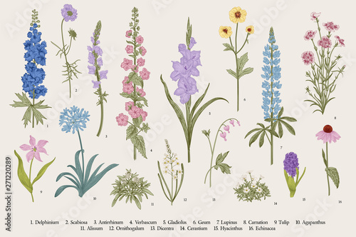 Foto Garden flowers. Set. Vintage vector botanical illustration.
