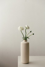 White Ranunculus In A Tall Beige Vase In A Moody Setting.
