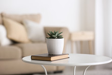 Green Succulent In Pot With Book On Table In Room