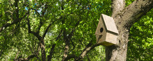 Wooden House For Birds On The Tree In The Garden