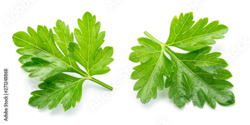 Fotografie, Tablou  Parsley. Parsley isolated. Top view. Full depth of field.