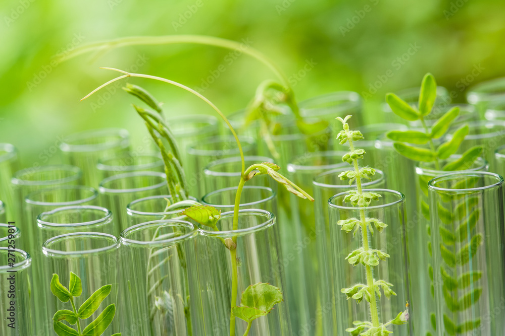 Fototapeta young sample plant growing in test tube , biotechnology research concept