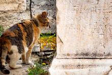 Cat Is On The Temples Ruins Of Ancient Greece Civilization