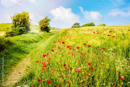 La pose en embrasure Pistache magnifique coquelicots en fleur dans la lumière du printemps