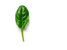 One Baby Spinach Leaf Isolated On White With Clipping Path. Fresh Green Baby Spinach Leaf With Copy Space. Top View Or Flat Lay