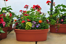 Potted Flower Plants In An Oval Shaped Pot