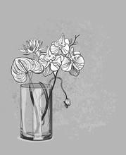 Vector Sketch Flower Background Card Vase Orchid Anthurium Lotus Glass
