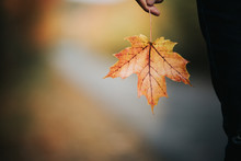 Maple Leaf In A Hand