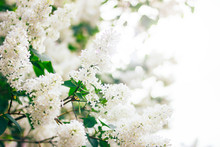 Spring Summer Background Of Na...