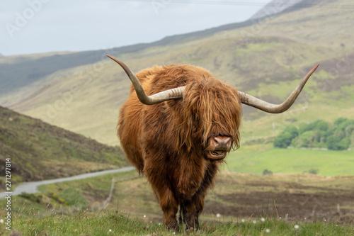 Fototapeta Isle of Skye Schottland / Highlander obraz