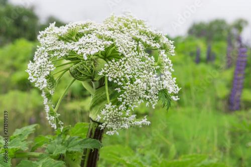 Poisonous plant Canvas-taulu