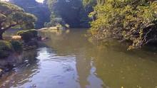 Lake In Park With Carp Swimming Around Looking For Food - Hong Kong, China