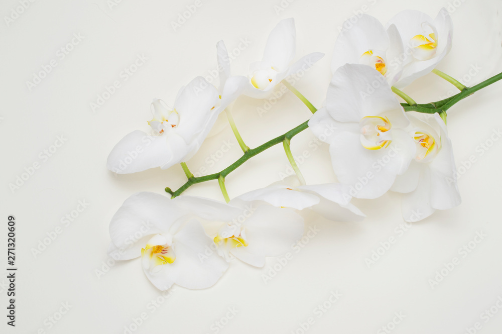 Fototapety, obrazy: romantic branch of white orchid on beige background.