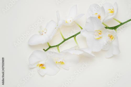 Photo sur Aluminium Orchidée romantic branch of white orchid on beige background.