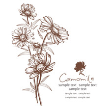 Hand Drawn Camomile Flowers Vector Illustration