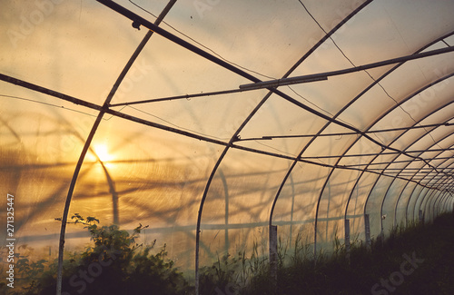 Fotografia Interior of a plastic greenhouse illuminated by the sunset, color toned picture