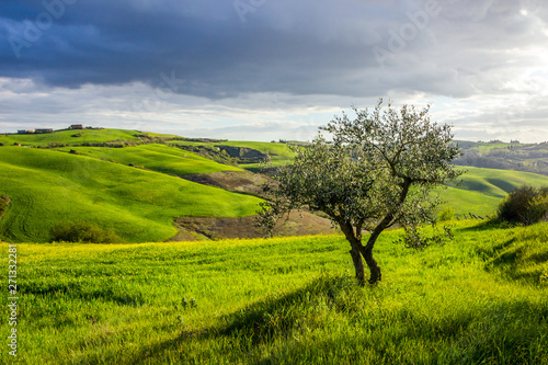 Spoed Fotobehang Weide, Moeras green fields and hills in Crete Senesi in Tuscany