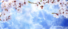 Tree Branches With Beautiful Tiny Flowers Against Blue Sky, Space For Text. Amazing Spring Blossom