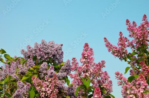 Poster Fleur Spring flowers of Toronto