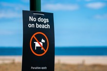 A 'No Dogs On Beach' Sign At T...