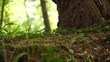 Moss part in forest. Beautiful slide. Natural environment. Green background full of texture.