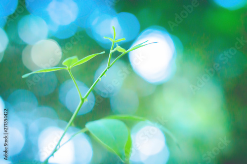 Poster Marron chocolat soft focus spring of green leaves and light bokeh at sunrise background