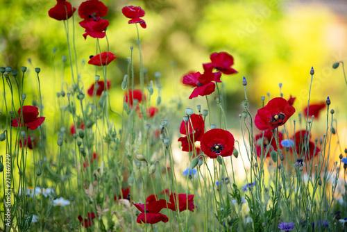 Tuinposter Zwavel geel Sommer Garten mit Klatschmohn, Kornblumen buntes Sommer Gefühl