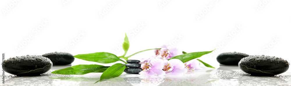 Fototapety, obrazy: Kwiaty na kamieniach | flower on stone