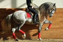 Equestrian Artist Dressage Rid...