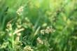 Leinwandbild Motiv natural grass meadow rural background