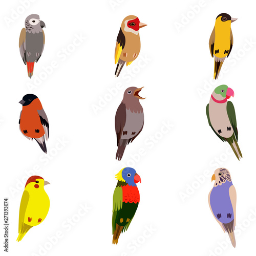 Poster Oiseaux, Abeilles Little Birds Set, Amadin, Bullfinch, Canary, Parrot, Nightingale, Goldfinch, Budgerigar, Cute Home Pets Vector Illustration