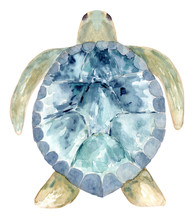 Hand Painted Watercolor Turtle...